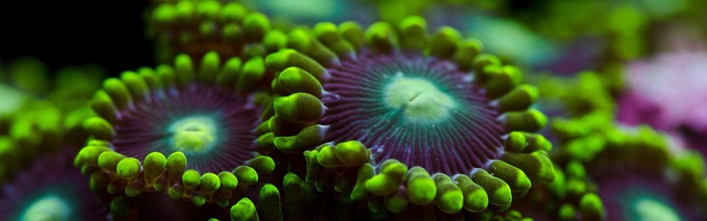 mercan (11)
