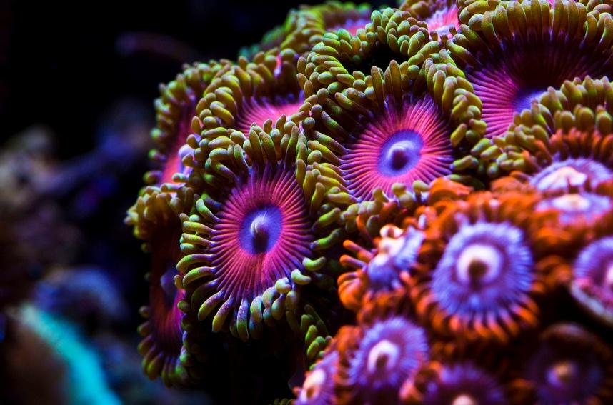 mercan (16)
