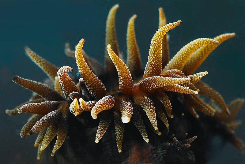 mercan (41)