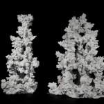Korallenwelt - Maxiriff